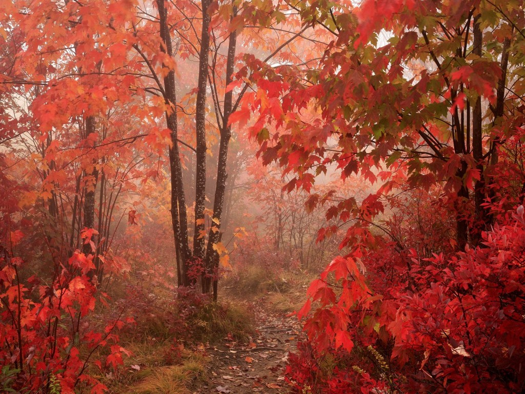 fall Nature Forest Red Autumn forest 011599 How To Use Fall Sceneries